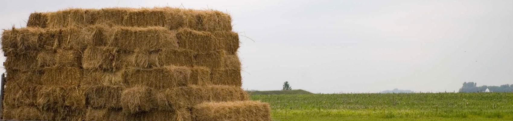 need-in-haystack