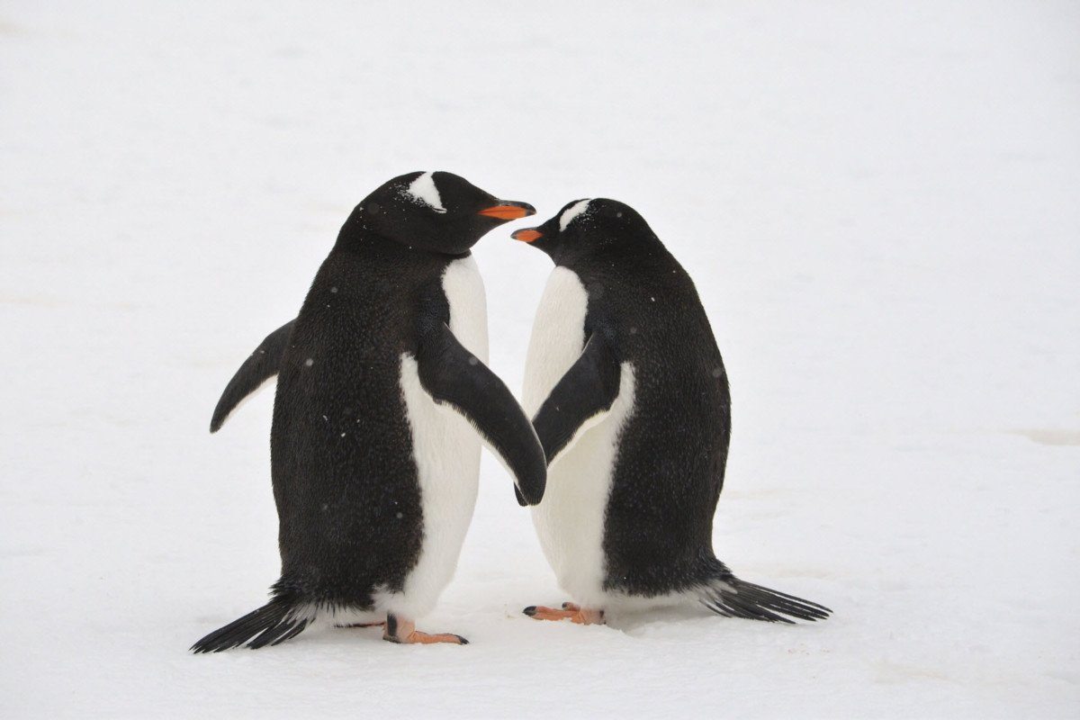 Why Google Penguin is Now Your Friend - Start SEO Now!