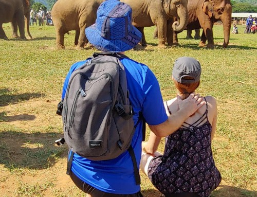 YCBF Anywhere: SEO at Thailand Elephant Nature Park